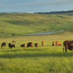 JetTrack Cattle on the farm with GPS Tracker